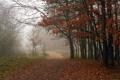 Картинка дорога, деревья, пейзаж, природа