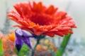 Картинка капли, цветок, вода, лепестки