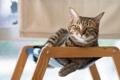 Картинка взгляд, отдых, кошак, котяра, котэ