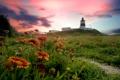 Картинка закат, облака, трава, маяк, цветы