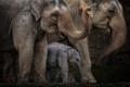 Картинка семья, слоны, большие, слоненок, хоботы