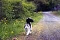 Картинка кошка, дорога, лето