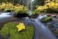 Картинка осень, лес, река, ручей, камни, мох, Природа