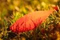 Картинка осень, трава, лист