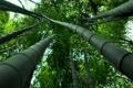 Картинка лес, листья, фото, листва, бамбук, ствол, david plus
