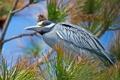 Картинка иголки, дерево, птица, ветка, перья, клюв