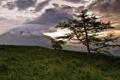 Картинка природа, пейзаж, горы, закат, дерево