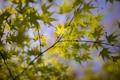 Картинка природа, голубое небо, ветки, зеленые листья, макро