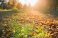 Картинка природа, осень, свет