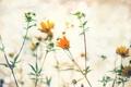 Картинка листья, цветы, стебли, бутоны, боке