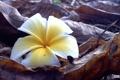 Картинка цветок, листья, природа, лепестки, веточки