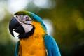Картинка птица, попугай, боке
