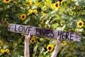 Картинка фон, настроение, надпись, love lives here