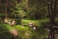 Картинка зелень, трава, деревья, пруд, парк, камыши, камни