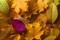 Картинка nature, autumn, Leaves