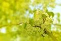 Картинка зелень, цветок, макро
