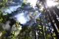 Картинка лес, небо, солнце, свет, деревья, пейзаж, природа