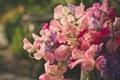 Картинка цветы, букет, горошек, душистый