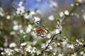 Картинка цветы, ветки, природа, бабочька