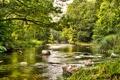 Картинка зелень, лес, лето, трава, деревья, камни, течение