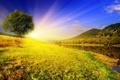 Картинка река, трава, небо, рассвет, вода, дерево, деревья