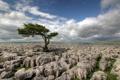Картинка поле, камни, дерево