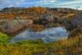 Картинка осень, трава, озеро, камни, холмы, деревце