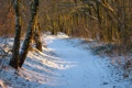 Картинка день, зима, лесок, лучи, тропинка, солнце
