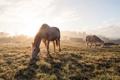 Картинка туман, кони, утро