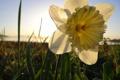 Картинка жёлтый, Цветок, flower