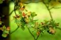 Картинка осень, листья, веточка, желудь, боке, дуб