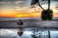 Картинка море, закат, птица