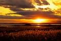 Картинка поле, облака, закат, озеро, стебли, горизонт, желтый небо