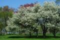 Картинка деревья, природа, фото, цвет, весна