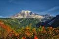 Картинка горы, небо, деревья, цветы