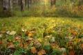 Картинка осень, трава, листья, капли, природа, роса, растения