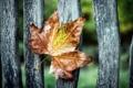 Картинка макро, лист, забор